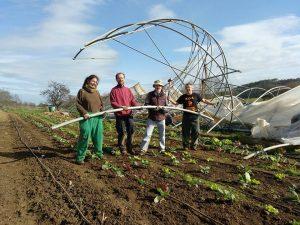 Voluntarios recogiendo los hierros del invernadero derribado por el viento.