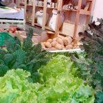 Varias verduras en primer plano